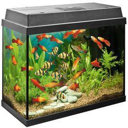 Aquarium Tank In Coimbatore Latest Price Mandi Rates From