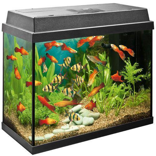 Aquarium Tank In Chennai Latest Price Mandi Rates From Dealers