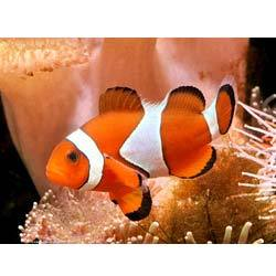 Marine Aquarium Fishes Importer From Chennai