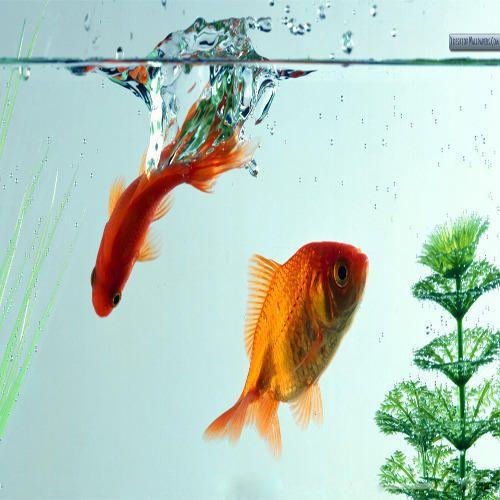 Aquarium Fish In Ernakulam Latest Price Mandi Rates From Dealers