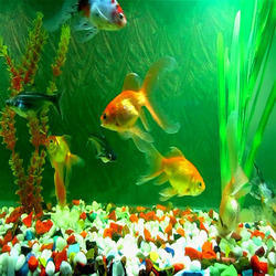 Fish Aquarium In Nagpur फ श एक व र यम न गप र