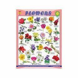 wall hanging chart flower chart manufacturer from new delhi