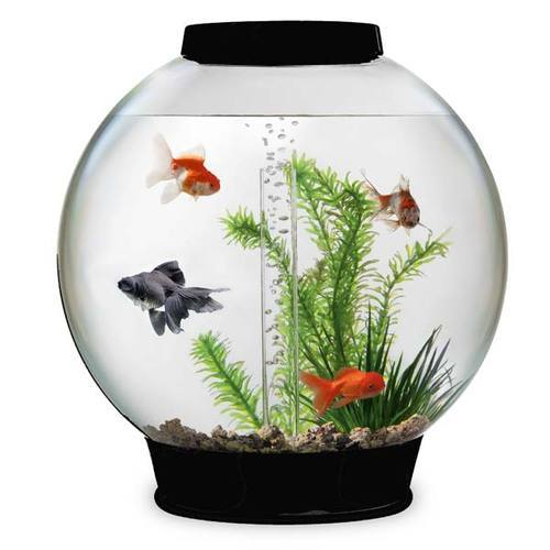 Fish Tanks In Chennai Latest Price Mandi Rates From Dealers In